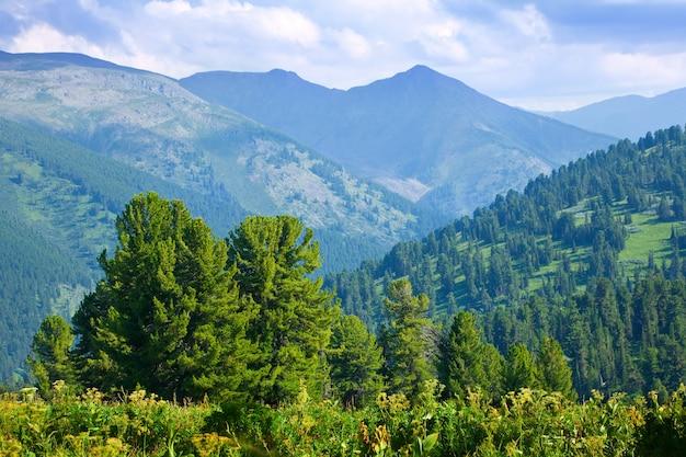 杉の林の山の風景