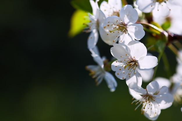 ぼやけの背景に花が咲く
