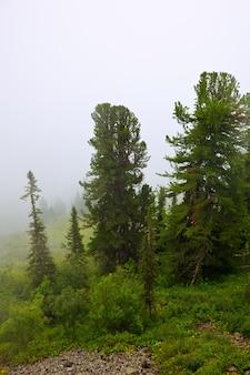 Туман пейзаж