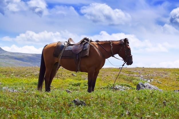 Оседланный конь