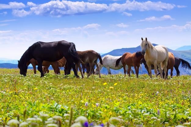山の牧草地の馬