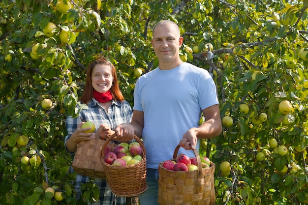 Мужчина и женщина выбирают яблоки
