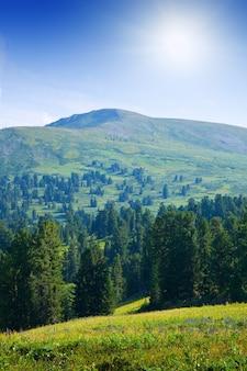 森林の山々