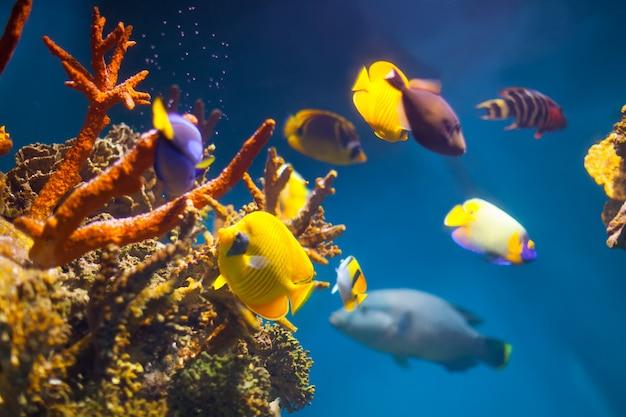 Разноцветные экзотические рыбы