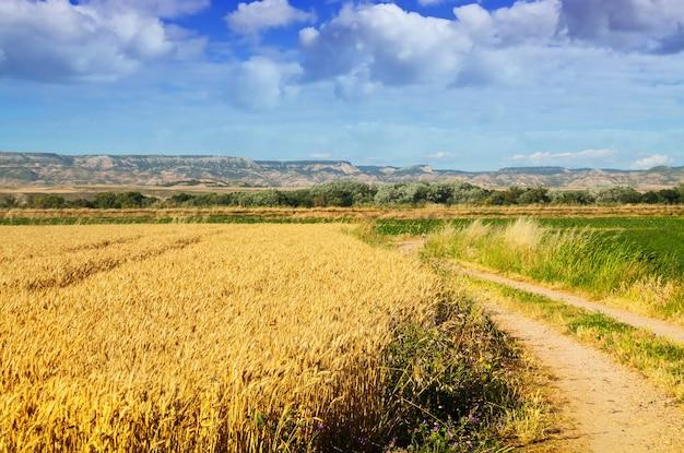 フィールドロードのある農村風景
