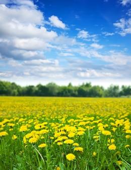 夏の日のタンポポの牧草地