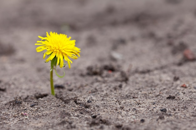 育っている黄色の花