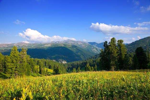 杉の森の山々の風景
