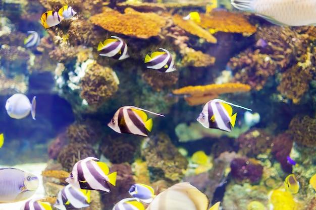 サンゴ礁での熱帯魚