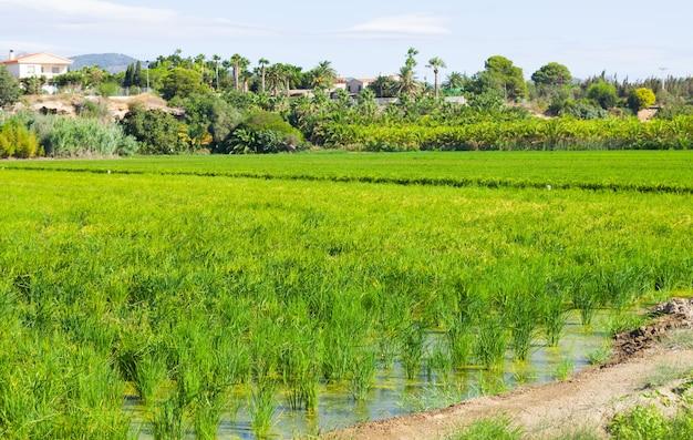 Сельский пейзаж с рисовыми полями