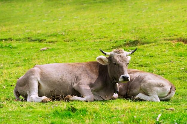 牛とふくらはぎ