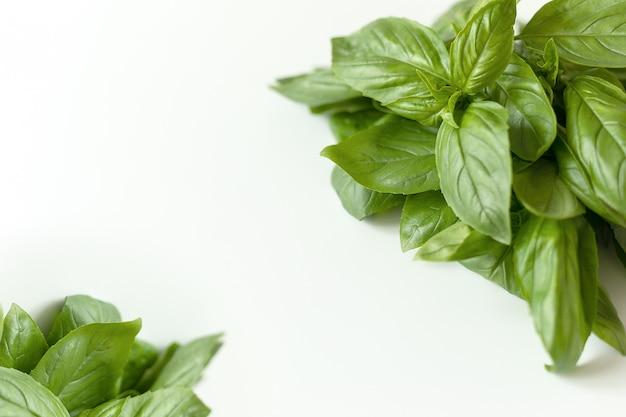 白で隔離される新鮮な緑のバジルハーブの葉のスタジオショットを閉じる