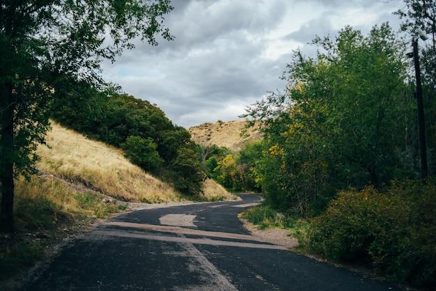 森の中の高速道路