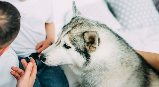 ハスキー犬は男の子とパパの部屋の近くに座っています。
