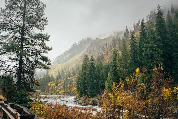 秋の霧の森の川