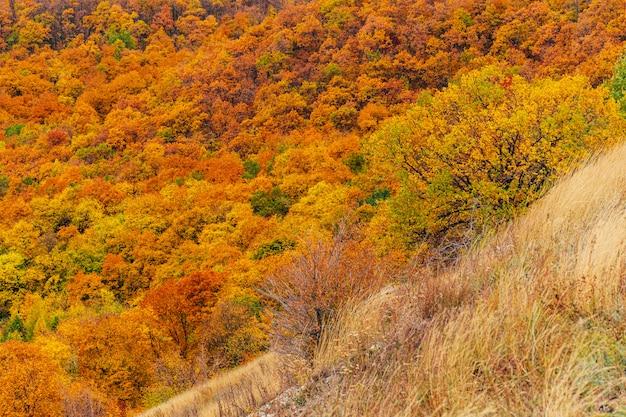 Осенний лес холмы природа
