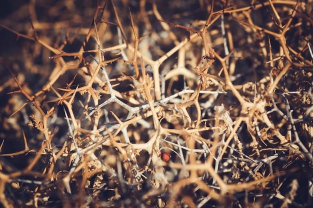 Колючий хедж. естественный фон