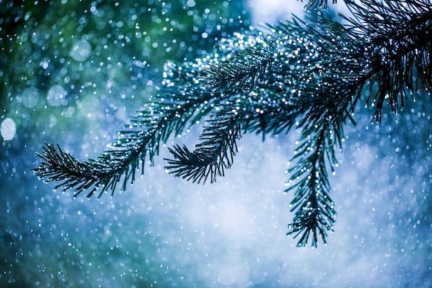 水しぶきの背景に松の枝の針