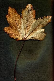 Осенний сушеный лист растения на черном фоне