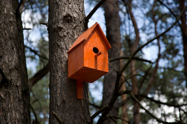 木のオレンジの巣箱