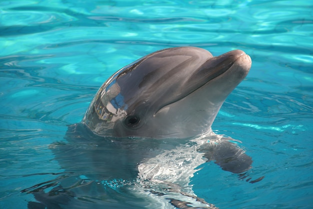 Позы дельфинов