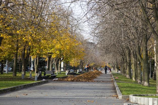 Уборка желтых листьев на набережной города днепр, украина