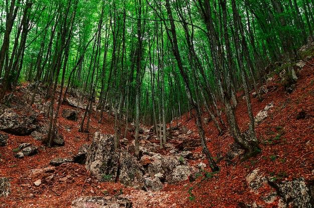 山の斜面の霧の秋の森