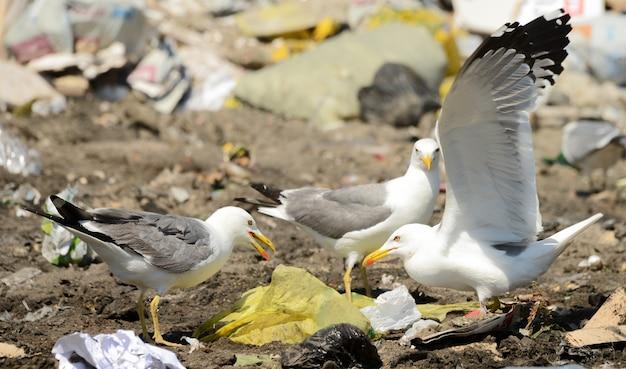 ゴミ捨て場のプラスチックのカモメ