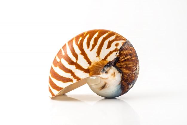 白い背景の上のオウムガイの殻