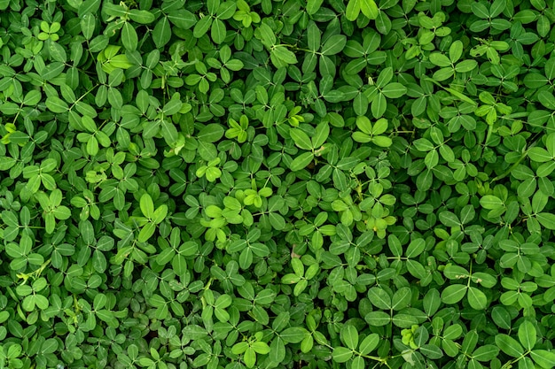 Фон текстуры зеленого листа