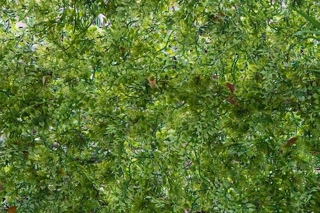 Текстура зеленого листа.