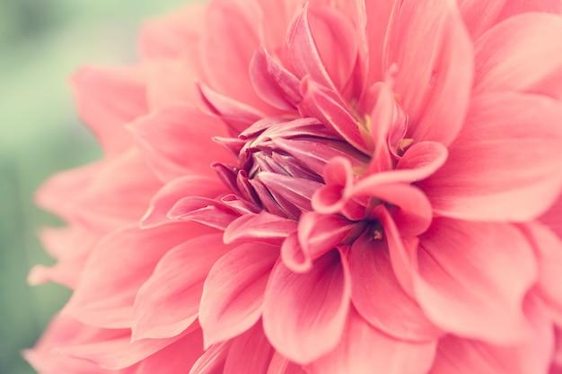 クローズアップマクロ花