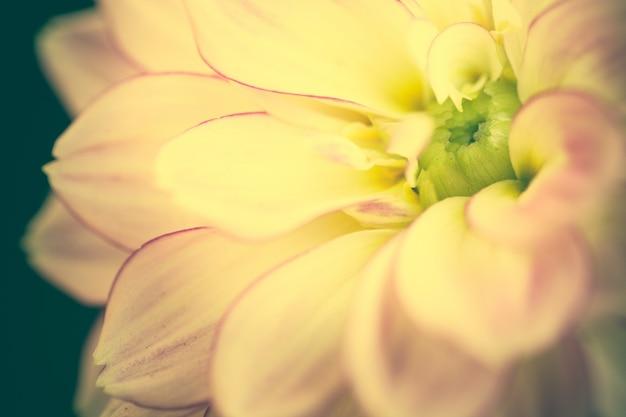 Крупным планом макро цветок