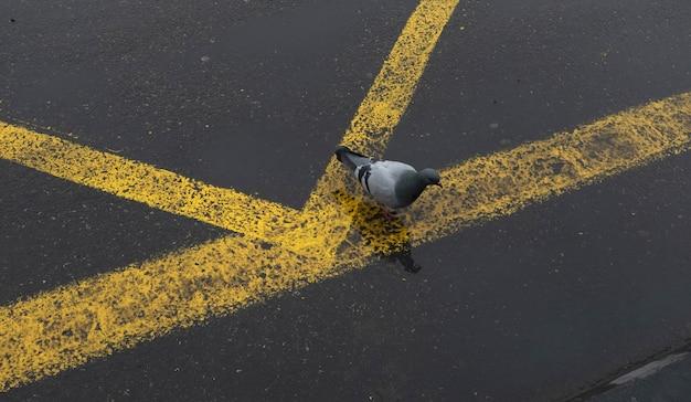 昼間に灰色の黄色の並ぶ道に座っている鳥の画像鳥
