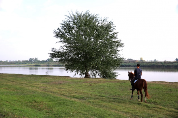 湖の近くの木に向かって馬を運転する男の裏