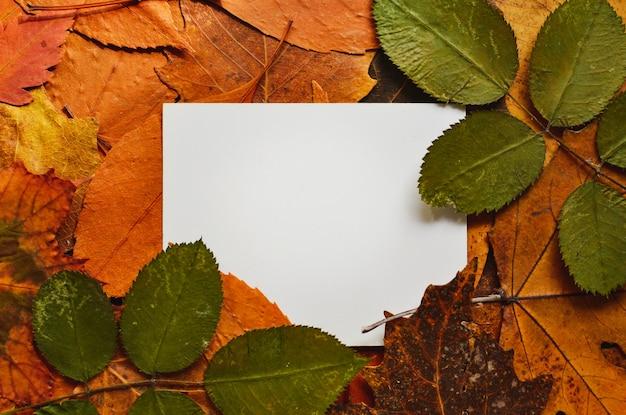 カラフルな紅葉の背景。