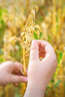 Рука ребенка, держащая уши овса.