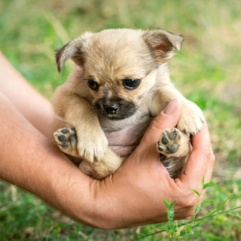 Маленький щенок сидит на руках
