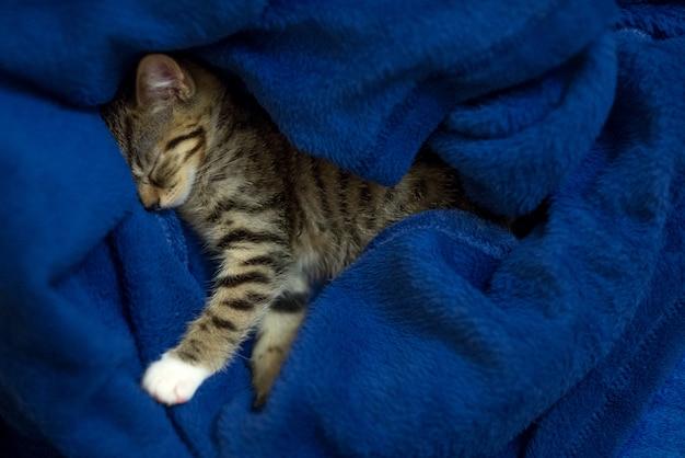 Милый маленький котенок с полосатым узором спит сладко в синем пледе