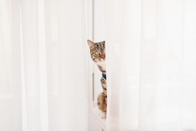 窓辺に座ってカーテンを探している子猫