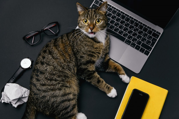 オフィスの机の上に横たわっている怒っている猫。ラップトップ、ノートブック、しわくちゃの紙のボール、消耗品と黒のオフィスのデスクトップの平面図。