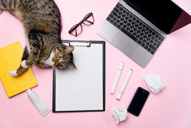 女性のオフィスデスクの背景の上に横たわる面白い遊び心のある猫