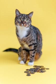 お金を節約、預金口座の概念。面白い猫は嘘をつき、貯金を守ります。コインでペット。