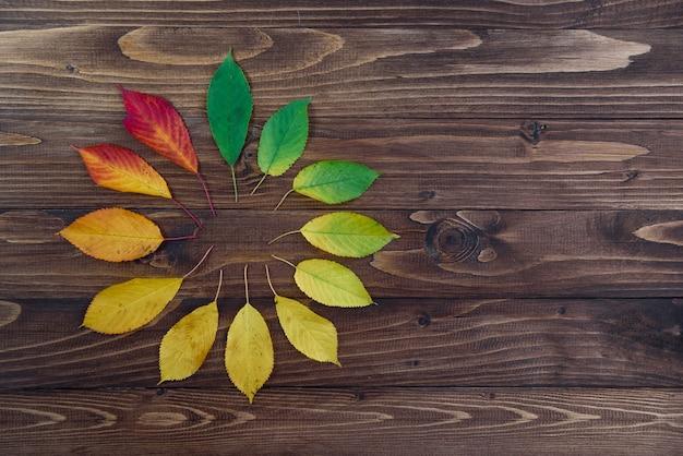 Осенние листья, установленные по кругу, переходят от зеленого к красному на деревянном фоне