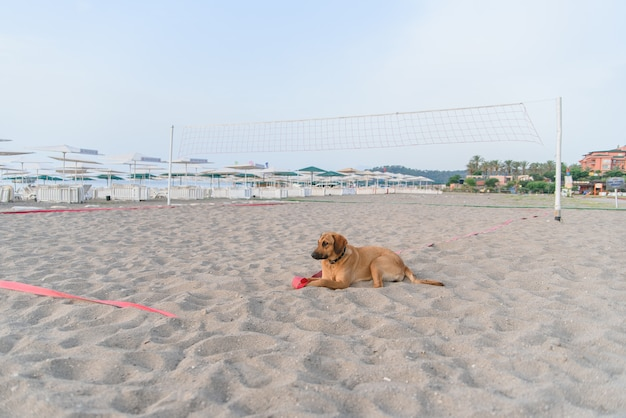 Собака отдыхает на песчаном тропическом пляже возле синего
