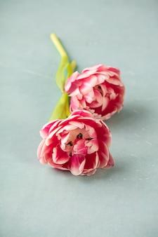Розовые тюльпаны на синем