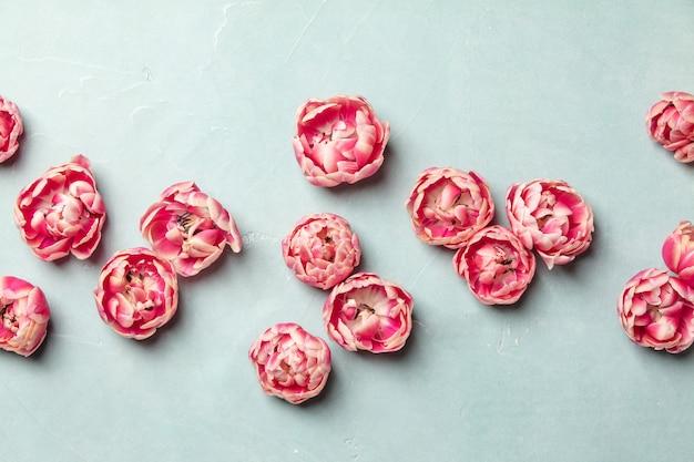 Розовые тюльпаны на синем фоне, вид сверху