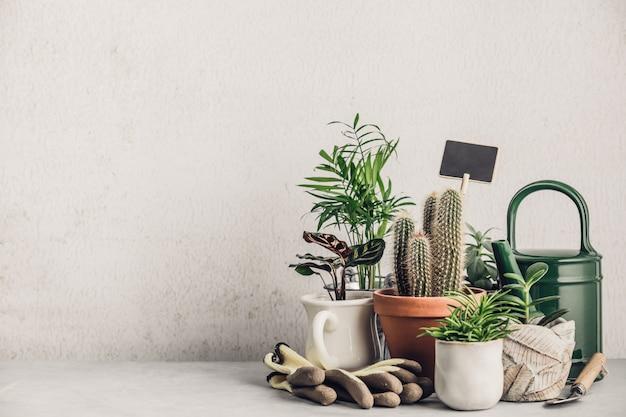 さまざまなポットにさまざまなサボテンと多肉植物のコレクション。