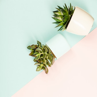 多肉植物の植木鉢。平置き