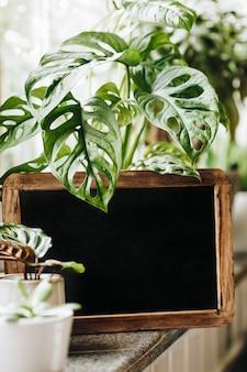 ウィンドウに緑の植物を鉢植え。家の装飾とガーデニングのコンセプト。空白の黒板フレーム